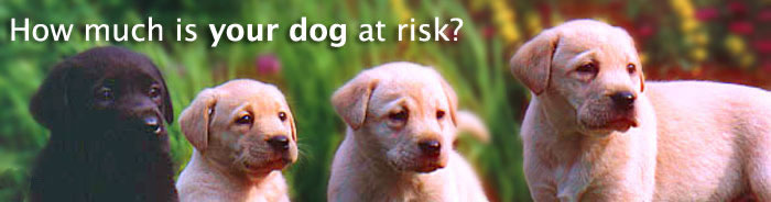 This image has an empty alt attribute; its file name is dog-risk-puppy_tcm102-136207.jpg