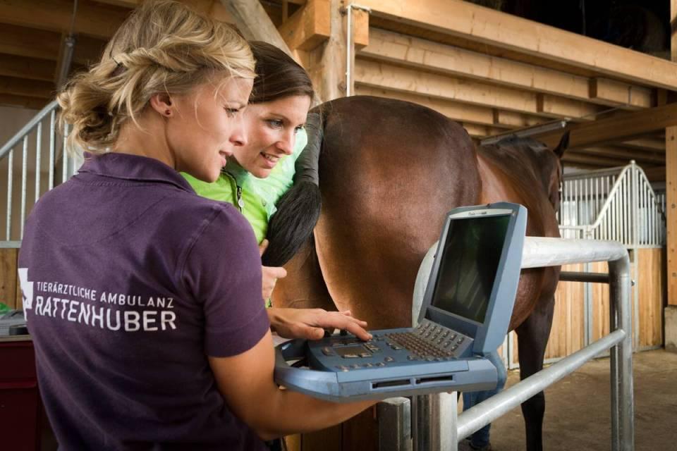 Horse laptop vet