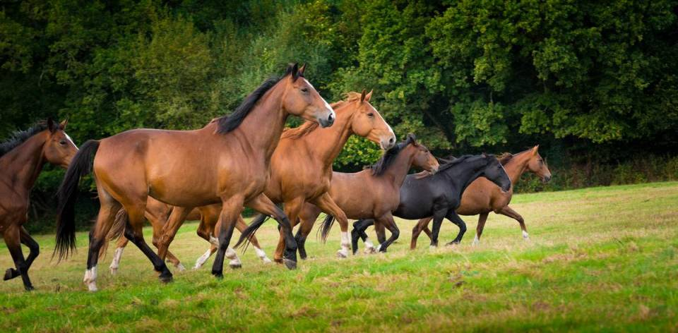 Group of horses at grass