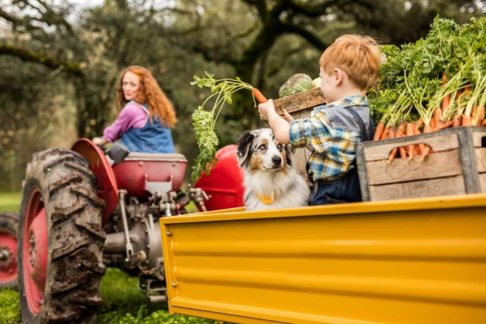 Dog tractor