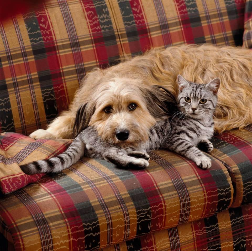 Dog cat Caninsulin