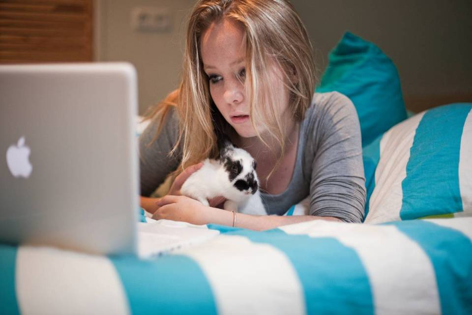 Rabbit and girl viewing laptop