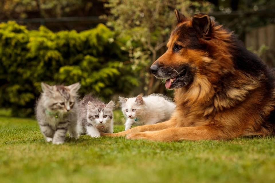Kittens outdoors