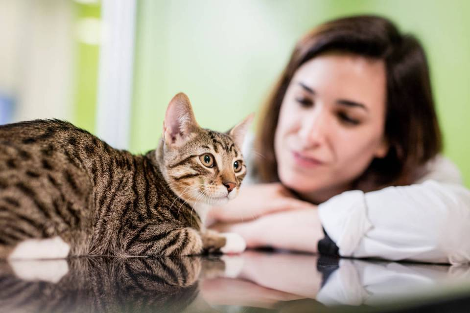 Cat vet clinic