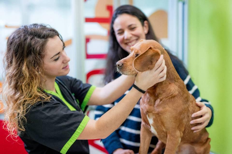 Dog vet clinic